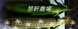 慧軒農場  水果玉米/黑寶玉米/栗子地瓜的LOGO