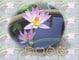 lotus1926的賣場~阿彌陀佛...的LOGO
