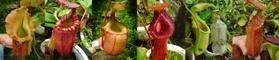 珍奇植物的LOGO