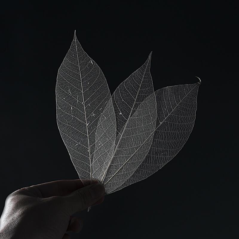 {金繕修復}}現貨天然樹葉葉脈 變涂起紋大漆漆器漆畫漆藝材料