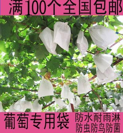 番石榴防蟲袋梨子套袋專用袋水果保護網袋防蟲網果袋包水果的袋子