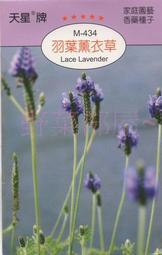 【野菜部屋~】S19 羽葉薰衣草 Lace Lavender ~蕾絲薰衣草~天星牌包裝種子~每包15元~