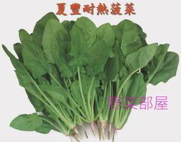【野菜部屋~蔬菜種子】A22 夏豐耐熱菠菜種子5.9公克 (約700粒), 清甜爽脆 , 全年可種植 , 每包12元 ~