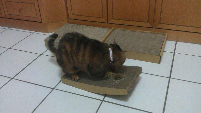 <喵喵貓抓板小舖> 大搖床適用於大貓.小貓只要$100小搖床只要$50歡迎問與答