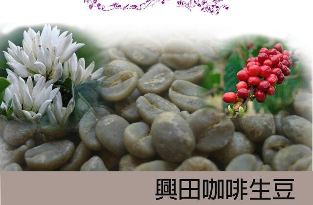 【興田咖啡生豆】 杯測93分 衣索匹亞 水洗耶加雪菲G1 艾瑞嘉 *好豆風味迷人【每包500公克180元】