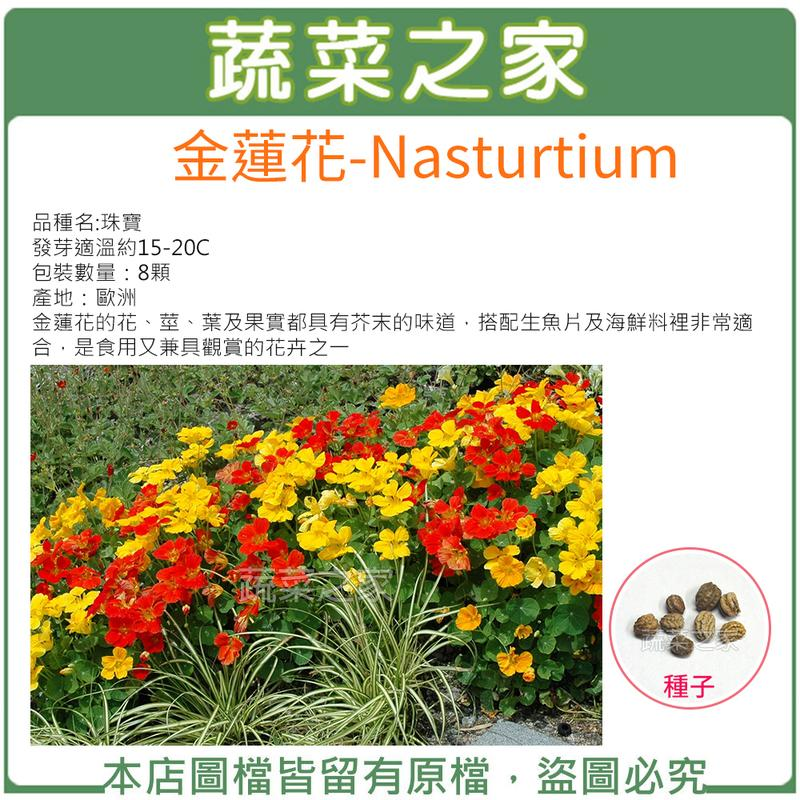 【蔬菜之家】 H47.金蓮花種子8顆(花、莖、葉及果實都具有芥末的味道,搭配生魚片及海鮮料裡非常適合)