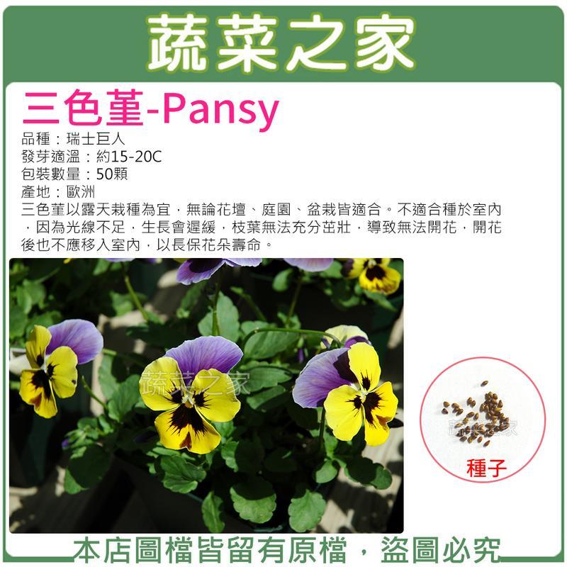 【蔬菜之家】H46.三色堇種子50顆(無論花壇、庭園、盆栽皆適合。不適合種於室內)