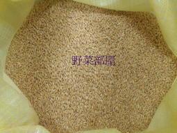 【野菜部屋~】黃金小麥草種子 1斤(600公克) ,營養價值高 , 含豐富維生素 , 寵物可食用 , 貓草種子~