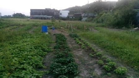 桃園(林口 造幣廠旁)農地出租  假日農夫 開心農場  自己種菜