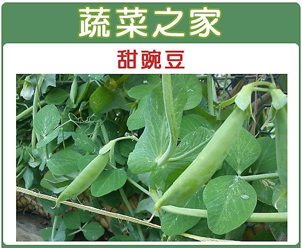 【蔬菜之家】E03.甜碗豆種子100顆(嫩豆.豆莢翠甜)