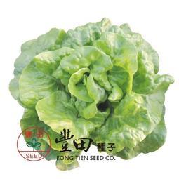 【野菜部屋~】B26 休士頓白奶油萵苣種子2.2公克(約2000粒) , 品質脆嫩 , 口感佳 ,每包12元~