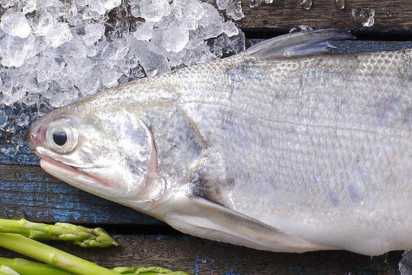(食魚)~~新鮮 現撈 真空 午仔魚 可做 一夜干 限量