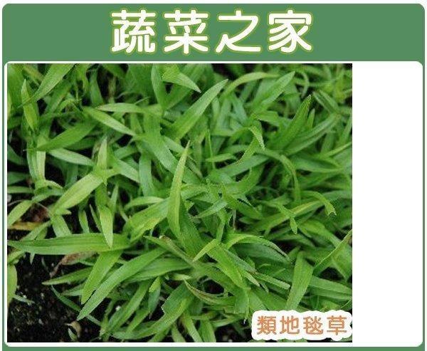 【蔬菜之家】M03.類地毯草種子5000顆(草皮種子)