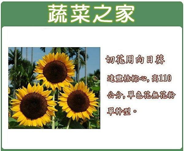 全館滿799免運【蔬菜之家00H40】大包裝.切花用向日葵80顆