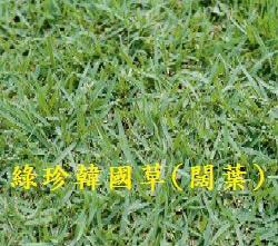 【尋花趣】綠珍韓國草 100公克/包 草種子 您想種台北草又不想用高成本的草皮嗎?與台北草(韓國草的一種)相似的草種。