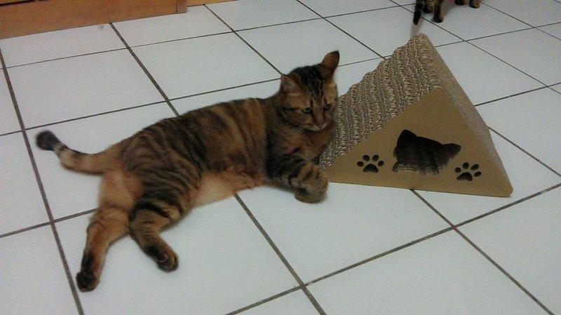 <喵喵貓抓板小舖>御飯團貓抓板特價只要299一次抓兩種造型.賣場滿千還送貓抓板