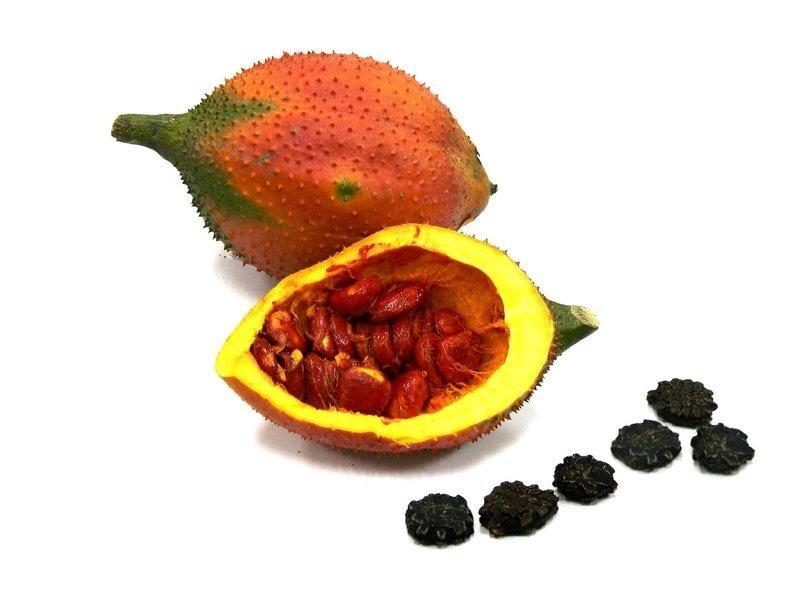 YenQ~木鱉果種子~越南種