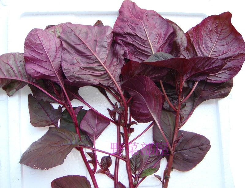 【野菜部屋~】A09 朱雀全紅紅莧菜種子10公克 , 生育強壯 , 耐熱 , 全株紅色 , 每包12元~