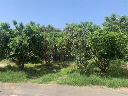 ♘新竹市南隘國小平坦農地-春明地產-03555111