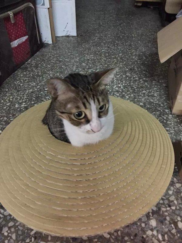 <喵喵貓抓板小舖> 飛碟貓盆特價只要690免運費
