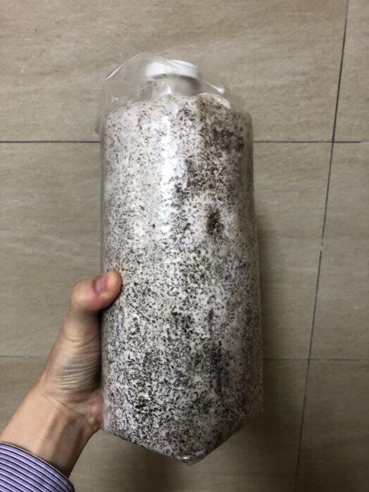 yo喲農場 有機 香菇 黑木耳 袖珍太空包 促銷100包