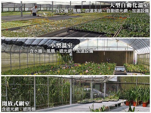 《蝦米小花園》溫室出租.蘭花旅館服務