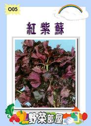 【野菜部屋~蔬菜種子】O05日本紅紫蘇種子0.65公克(約500粒) , 氣味溫和 , 每包12元~