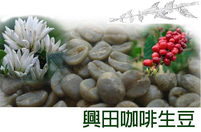 【興田咖啡生豆】巴拿馬 翡翠莊園 藝妓咖啡 藍標水洗 1500公尺批次(非競標批次)