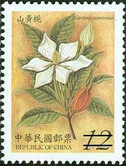 家坤種子專賣店: 梔子花種子 黃槴子種子 野桂花種子 山黃梔種子 (  藥用植物 )