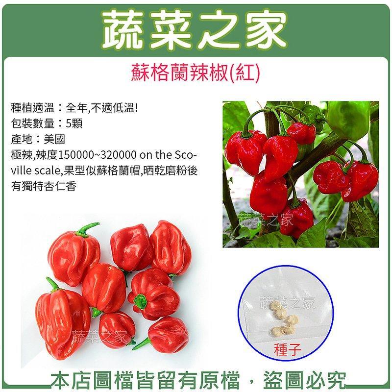 【蔬菜之家】G98.蘇格蘭辣椒(紅)種子5顆(極辣,果型似蘇格蘭帽,晒乾磨粉後有獨特杏仁香)