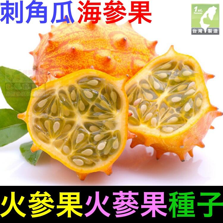㊣【我想發芽】火參果種子 火蔘果 刺角瓜 海參果 非洲角瓜 奇異植物 可盆栽 易栽好活 約5粒/包