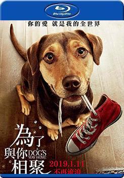 BD25G藍光影片:為了與你相聚 :A Dog Ways Home :BD-14886