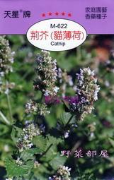 【野菜部屋~】S09 荊芥(貓薄荷)Catnip~天星牌原包裝種子~每包15元~