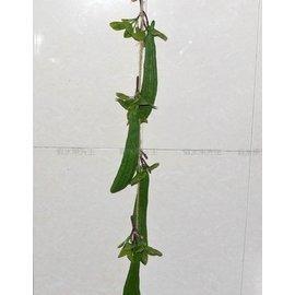 仿真蔬菜假水果模型庭院裝飾掛飾絲瓜串2串入