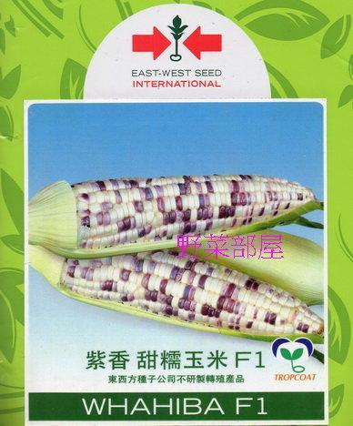 【野菜部屋~】N07 紫香甜糯玉米種子一磅 (約2600顆種子) , 口感香且Q , 甜度高 , 生長強健~