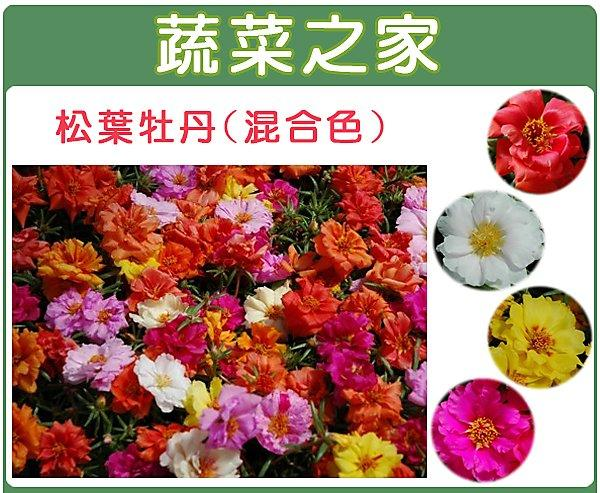 全館滿799免運【蔬菜之家00H37】大包裝.松葉牡丹(混合色,匍匐性)種子450顆