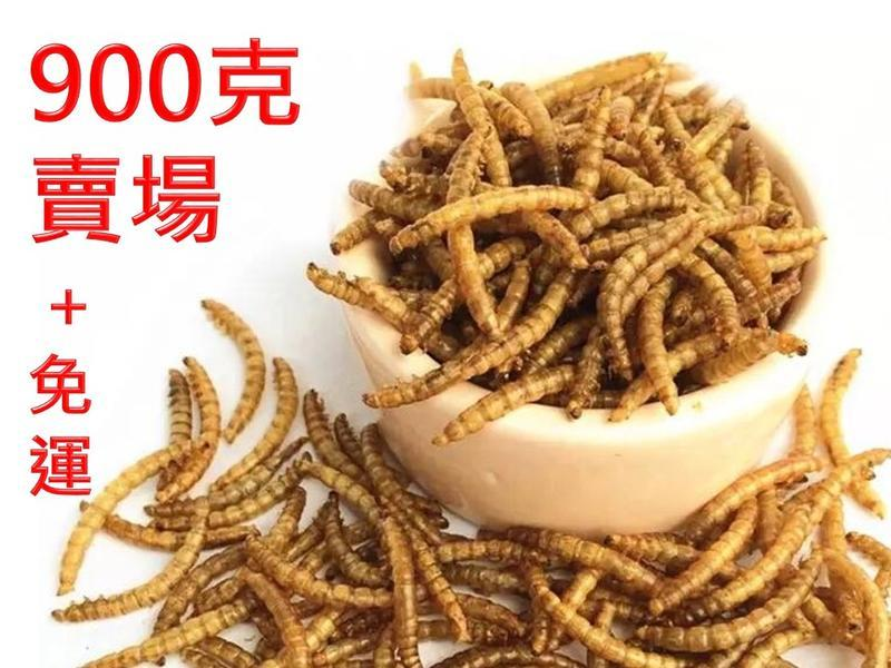 (900g=1320元,免運費)麵包蟲乾高蛋白食品,蜜袋鼯、刺蝟、倉鼠、烏龜、鳥類、龍魚、大型魚飼料零嘴
