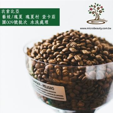 [微美咖啡]-1磅750元,藝妓/瑰夏 瑰夏村 查卡莊園009號批次 水洗(衣索比亞)淺焙咖啡豆,500免運新鮮烘培