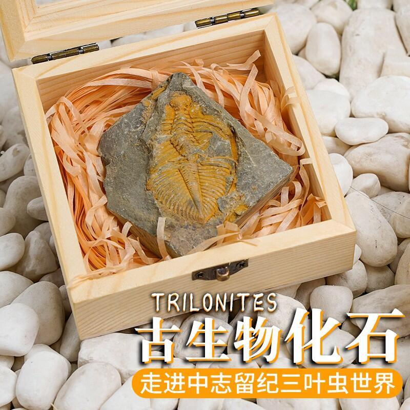 【奇石】三葉蟲古生物化石原石標本盒天然礦石奇石石頭小擺件生日禮物寶石熱銷